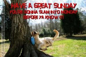 sundaydog